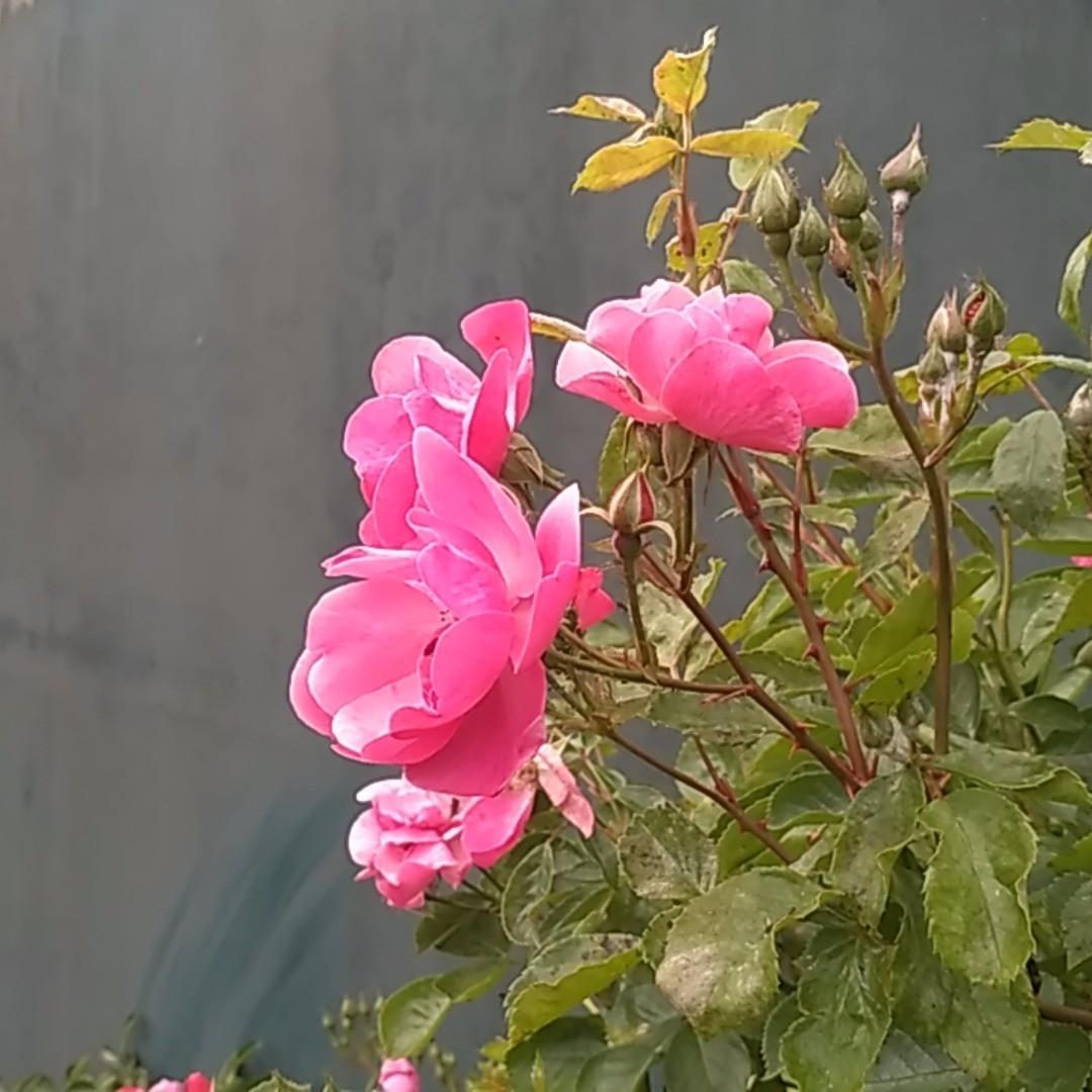 #ersteblüte <a rel=